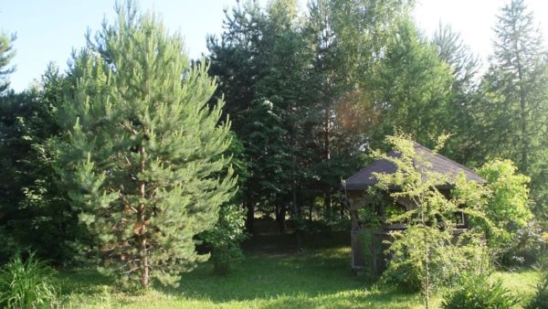 Какие деревья нельзя сажать у дома? Советы опытного садовода-рекордсмена
